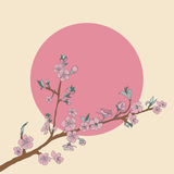 Flowering cherry branch on background of sun. Vintage Royalty Free Stock Photography