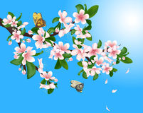 Flowering cherry branch with butterflies and flying petals on a blue sky background. Royalty Free Stock Photos