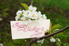 Flowering cherry branch with a card - Happy Mother's Day stock photography