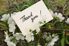 Flowering cherry branch with a card - Thank you. Flowering cherry branch with a card with a hand inscription - Thank you Royalty Free Stock Photos