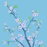 Flowering cherry branch.Vintage background Stock Photo