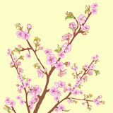 Flowering cherry branch.Vintage background Stock Photography