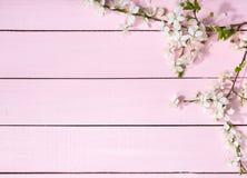 flowering cherry branches. Stock Photo