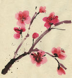 Flowering cherry. Spring. Ink and brush. Stock Images