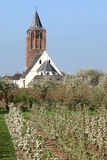 Flowering cherry trees and reformed dutch church. In dutch river area Betuwe you can find many fruit growers. In spring the cherry trees are coloured white by Stock Photo