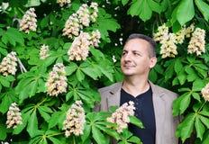 Flowering chestnut Stock Photos