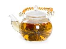 Flowering Chinese tea Stock Photos