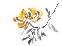 Flowering chrysanthemum Royalty Free Stock Images