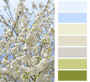 Flowering color chart Stock Photography