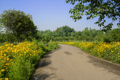 Flowering countryside way across orchard in sunny summer morning Royalty Free Stock Photos