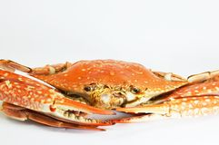 Flowering crab Stock Photo