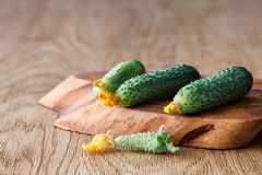 Flowering cucumbers on a wooden board Stock Images