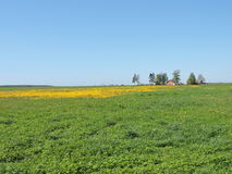 Flowering dandelion  field and homestead Royalty Free Stock Images