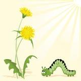 The Flowering dandelions. Vector illustration of the flowering of the dandelions Royalty Free Stock Photos