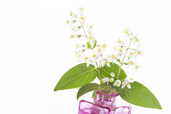 Flowering Deutzia Magnifica shrub Royalty Free Stock Photos