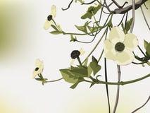 Flowering Dogwood backdrop Stock Photo