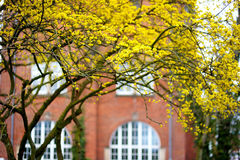 Flowering dogwoods on beautiful spring day Royalty Free Stock Images