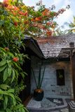 Flowering exotic plants above the roof of the house. Flowering exotic plants above the roof of the house stock image