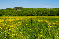 Flowering field. On blue sky background Stock Photo