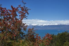 Flowering flame bushes along the Carretera Austral. Next to the azure blue waters of Lago General Carrera in Patagonia, Chile Stock Photography