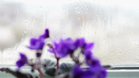 Flowering flowers in a pot on the windowsill in rainy weather stock video