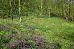 Flowering forest Stock Image