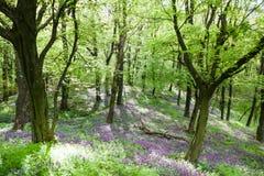Flowering forest floor Stock Image