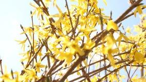 Flowering fruit trees. stock footage
