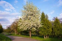 Flowering garden Royalty Free Stock Image