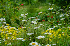 Flowering garden Stock Images