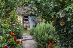 Flowering garden. In Pecs, Hungary royalty free stock photography