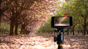 Flowering garden in the spring stock footage
