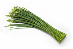 Flowering garlic chives. On a white background Royalty Free Stock Photography