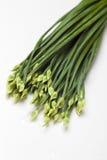 flowering garlic chives Stock Image