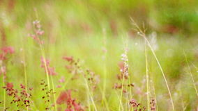 Flowering grass stock video footage