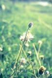 Flowering grass,vintage style light. Stock Photos