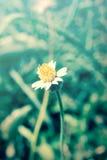 Flowering grass,vintage style light. Stock Image