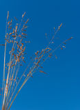 Flowering grasses Stock Photo