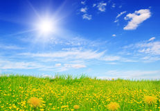 Flowering green field and sun sky Royalty Free Stock Photo