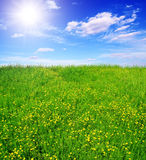 Flowering green field and sun sky Stock Photos