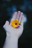 Flowering hand Stock Image