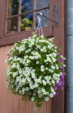 Flowering hanging basket Stock Photography