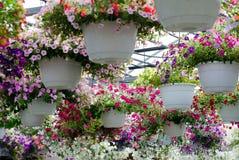 Flowering hanging baskets Stock Photos