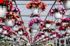 Flowering hanging garden baskets Stock Photo