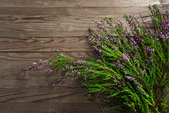 Flowering Heather Stock Photography