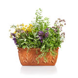 Flowering Herbs Stock Photo