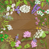 Flowering herbs on wooden background. Circle of flowering herbs on wooden background. Vector illustration Royalty Free Stock Images