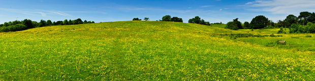 Flowering hillside Stock Photo
