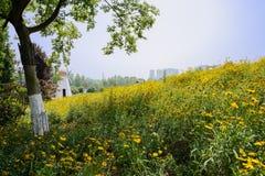 Flowering hillside at sunny summer noon Stock Photo