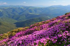 Flowering hillsides Stock Image